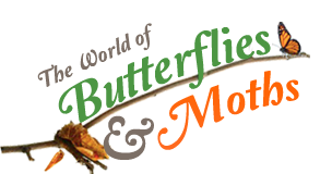 World of Butterflies and Moths